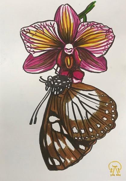 Орхидея и бабочка. Скетч.