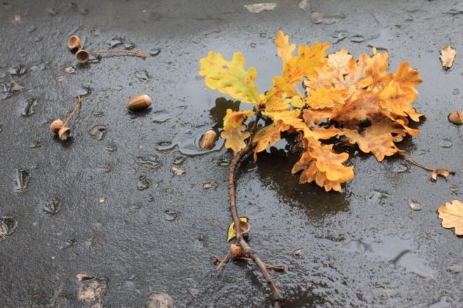 Дубовый лист на мокром осфальте