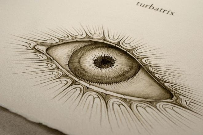 SUBINTRA turbatrix
