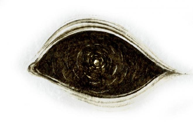 SUBEXTRA obscurum