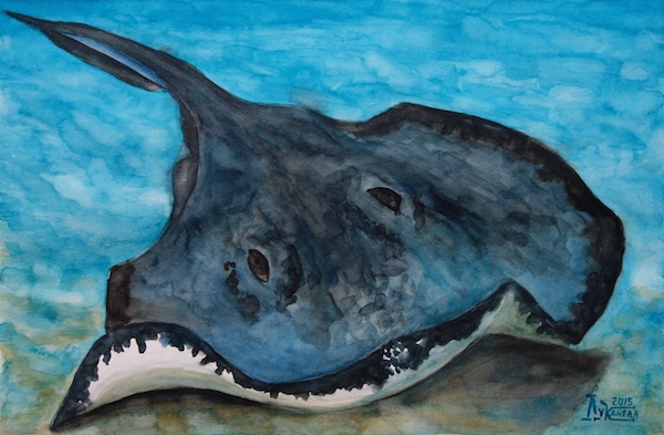 Картина акварелью Скат