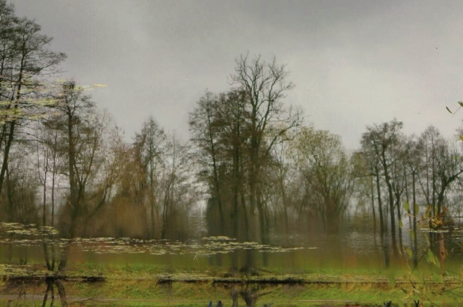 Картина акварелью Осенний этюд