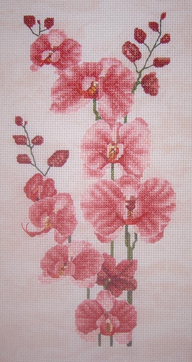 Орхидейное великолепие