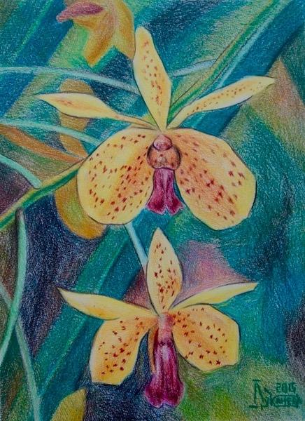 Картина Желтые орхидеи