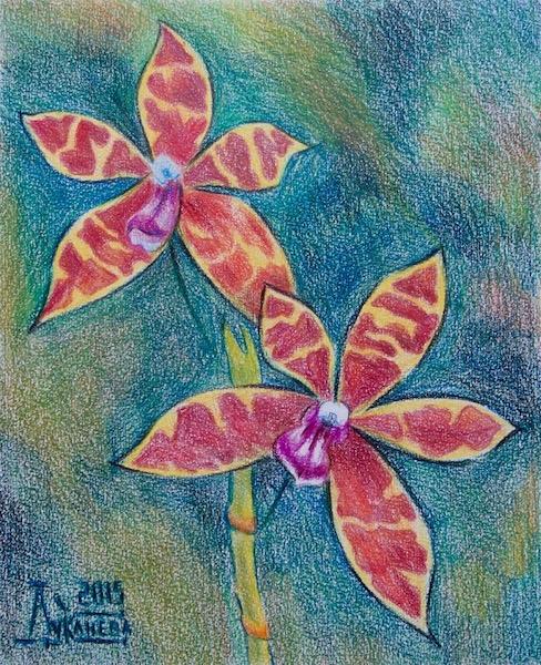 Картина Фаленопсис